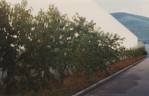 Frutteto 2000
